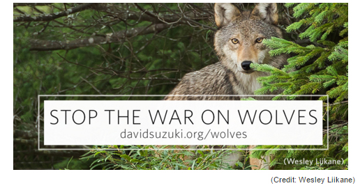 2016 08 17 David Suzuki Wolves