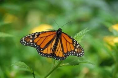 gran-canaria-spain-island-butterfly-67544