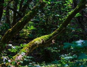 Lawson Reserve-19