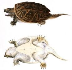 turtle3