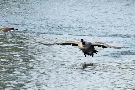 LakeWhitaker_007_BGrant