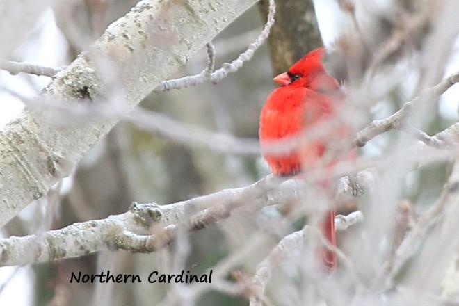 birdcount01087