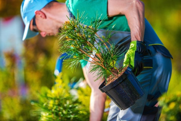 University of Waterloo study links planting native trees, greenery with lower day-timetemperatures