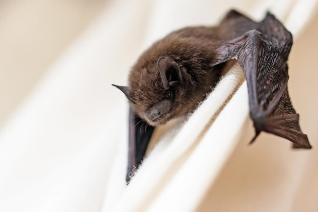 The Canadian Bat BoxProject